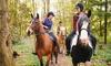 Séance découverte des chevaux
