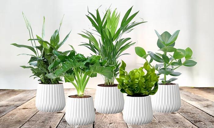 air purifying plant mix groupon goods