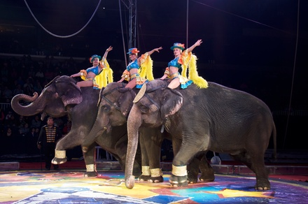 Shrine Circus on March 13 at 4:30 p.m. or 7:30 p.m.