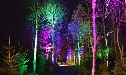 Mystical Gardens