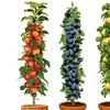 1 ou 2 lots de 4 arbres fruitiers