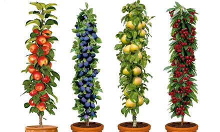 Four Pot Grown Pillar Fruit Trees