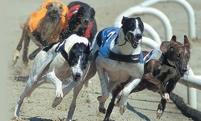 image for Greyhound Racing Night with Meal, Drink, Bet Tote and Programme, 28 April - 29 September at Kinsley Dogs (Up to 68% Off)
