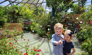 33% Off Admission for Two to Butterfly World at Butterfly World, plus 6.0% Cash Back from Ebates.