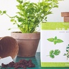 Nature's Blossom Herb Garden Growing Kit (5-Piece)