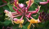 5 or 10 Scented Climber Plants