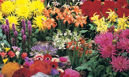 Up to 400 Summer Colour Bulbs