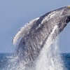 Up to 45% Off a Whale- and Dolphin-Watching Cruise