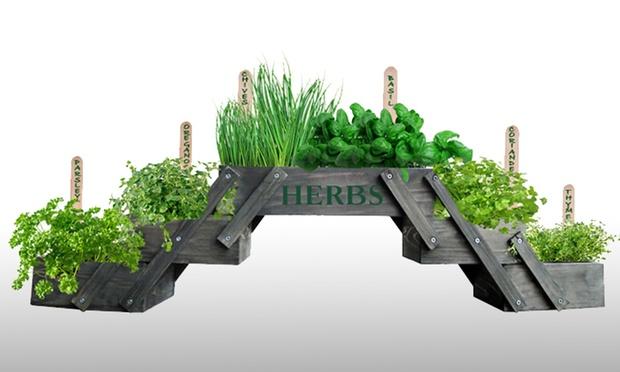 Comfort living deal du jour groupon - Herbes aromatiques en pot ...