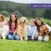 eKurs: Behawiorysta psów