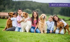 Kar-Group: Kurs online z certyfikatem: Behawiorystyka psa za 49 zł w Kar-Group