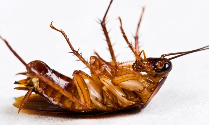 A1 Home Pest Control - Rio Pinar Lakes: $49 for Interior and Exterior Pest-Control Treatment from A1 Home Pest Control ($125 Value)