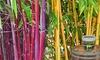 Bambus-Raritäten Kollektion