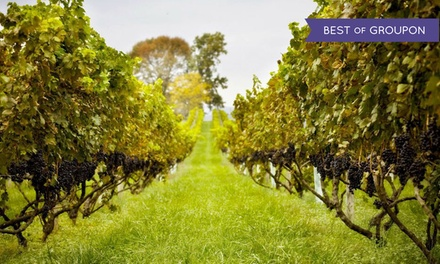 Vineyard Tour, Souvenir Wine Glasses, and Charcuterie for Two or Four at Philip Carter Winery (Up to 59% Off)