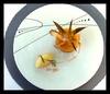 """Les Jardins d'Anglise - Six Fours Les Plages: Menu """"Gourmet"""" gastronomique en 5 services pour 2 personnes à 69 € au restaurant Les Jardins d'Anglise"""