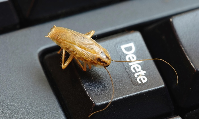 Pest Busters Exterminating Inc - Tucson: $34 for $99 Worth of Services — Pest Busters Exterminating Inc.