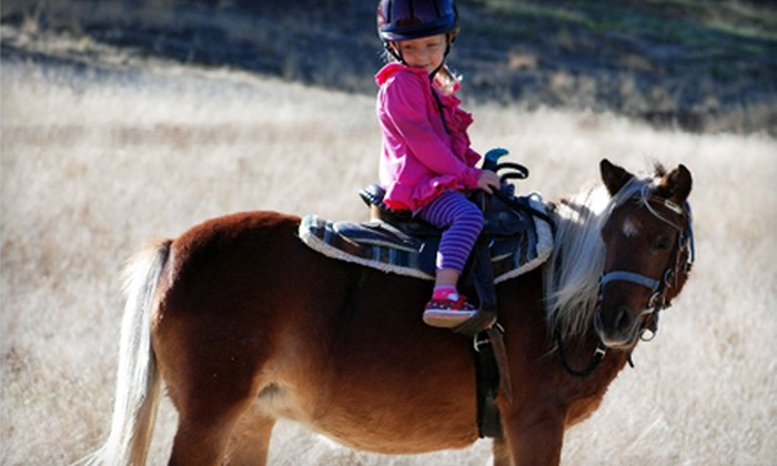 Castle Rock Arabians - Pine Creek: One, Three, or Five Adult or Children's Private Horseback-Riding Lessons at Castle Rock Arabians (Up to 63% Off)