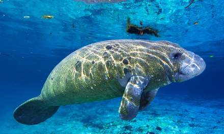 Manatee Eco-Tour and Shelling Adventure from Double R's Fishing and Tours Company (Up to 42% Off). Two Options.