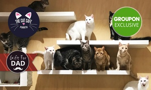 The Cat Cafe Purrth: Cat Cafe Experience with Food and Mug for 1 ($25) or Private Experience ($129) at The Cat Cafe Purrth(Up to $200 Value)