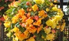 Groupon Goods Global GmbH: 10 or 20 Begonia Lemon and Apricot Shades Tubers