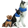 K9 Chill Cooling Collar for Dogs