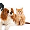 Massaggiatore aspira peli animali