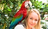 Urodziny w papugarni