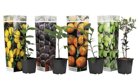Set de 4 u 8 fruteros mediterráneos (aceituna, higo, limón y naranja)