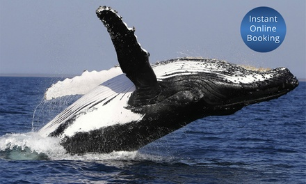 $45 for ThreeHour Weekend Whale Watching Cruise with Lunch with Get On A Boat Up to $99 Value