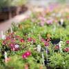 Half Off Plants and Garden Supplies in Shakopee