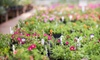 Minnesota Valley Garden Center - Louisville: $10 for $20 Worth of Plants and Garden Supplies at Minnesota Valley Garden Center in Shakopee