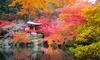 Set de 3 arces japoneses