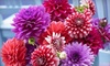 American Meadows: $25 for a Pacific Coast Summer Blooms Kit from American Meadows ($75 Value)