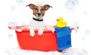 Bu-Bulle Dog: 3 lavages de chiens en libre service ou toilettage complet dès 15 € chez Bu-Bulle Dog
