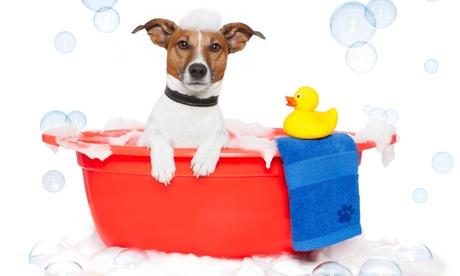 Peluquería con baño, arreglo y corte para perros de todos los tamaños desde 9,90 € en Peluquería Canina Teckelina