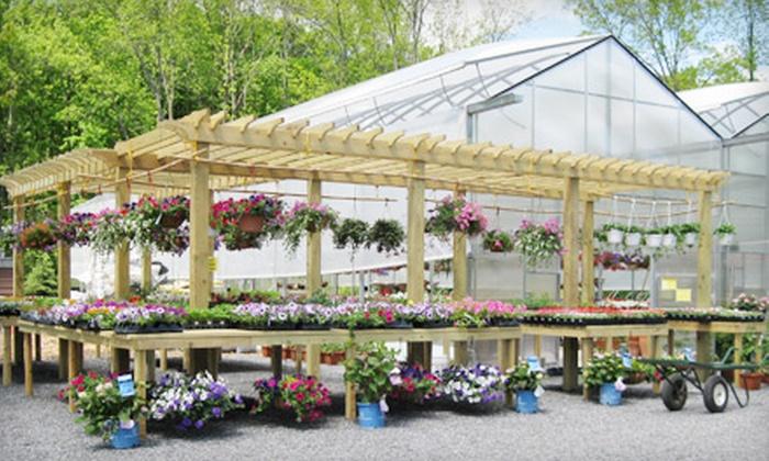 52 Off Annuals Perennials And Shrubs In Carmel