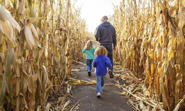 Corn Mazes And Fall Fun Sahl S Father Son Farm Corn Maze Groupon