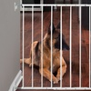 The Command Wall-Mounted Pet Gate