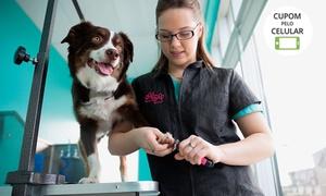 Recanto das Patas: Recanto das Patas – Santo André: banho e tosa higiênica + 5 procedimentos para cães de todos os portes