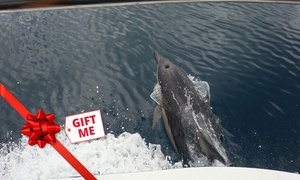 Dolphin Planet & Dreamweaver Charters: Dolphin Cruise - Child ($58), Adult ($98) or Family ($298) with Dolphin Planet & Dreamweaver Charters (Up to $395 Value)