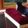 Lacey's Lookout Pet Furniture