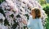 Clematis Montana 'Mayleen' Plant