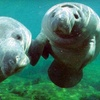 Up to 52% Off at Snorkel with Manatees