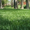 Up to 51% Off Lawn Aeration from LawnAmerica