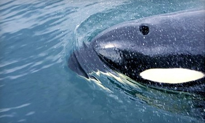 San Juan Excursions - Friday Harbor: $49 for a Whale-Watching and Wildlife Cruise from San Juan Excursions ($86 Value)