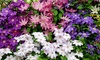 Lot de plantes clématites multicolores