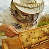 40% Off Bee Hive Inspection and Services