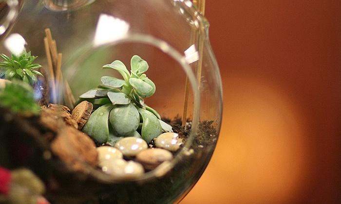 Bella Calla - Bella Calla: Sip Wine and Create Living Art in a Terrarium-Making Class