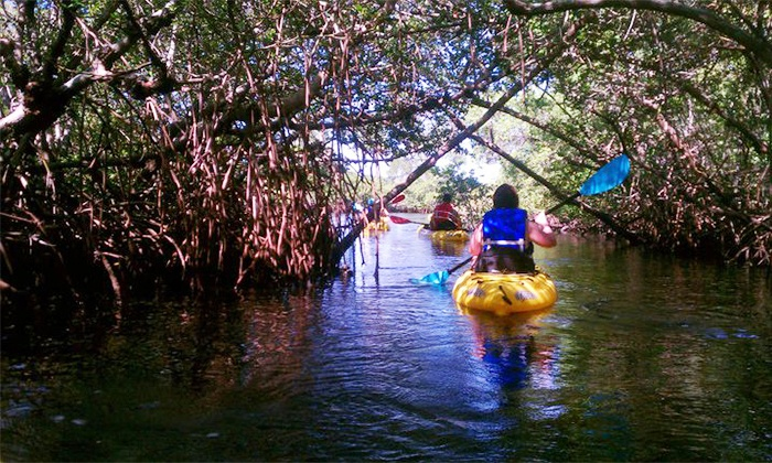 Shan-T Native Kayak Tours - Palmetto: $23 for a 2.5-Hour Exotic Mangrove Kayak Tour from Shan-T Native Kayak Tours (Up to $49 Value)