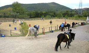 Centro Ippico La Rosa Canina ASD: 3 o 6 lezioni di equitazione da 60 minuti al Centro Ippico La Rosa Canina (sconto 81%)